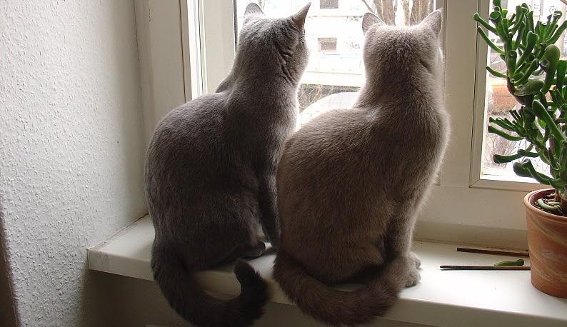 Katzen beim Umzug